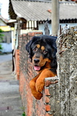獒犬:image783_調整大小.JPG