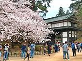 日本 平成時期的最後櫻花...2019 4月:3342DDDF-4A26-4B5E-A9F2-2DB604841D56_調整大小.jpg