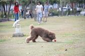 大型貴賓犬:DSC_8756_調整大小.JPG