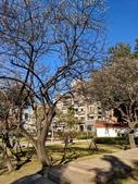 2021 至善公園 梅花林:IMG_20210115_093205_調整大小.jpg