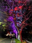 石岡 花漾藝術燈會:IMG_20210212_210005_調整大小.jpg