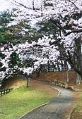 日本櫻花見:8F16A9DE-42F2-4730-A5C9-7FECF73F3334_調整大小.jpg