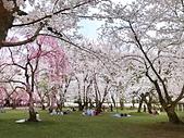 日本櫻花見:5A340A2C-6A12-4FE5-8523-206978063F64_調整大小.jpg