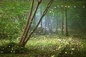 華梵大學的螢火蟲:S__547479560.jpg