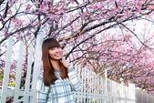 越來越愛你   2017平菁街賞櫻花: