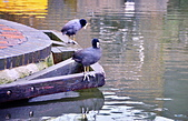 倫敦河畔市集:DSC_0765_調整大小.JPG