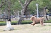 大型貴賓犬:DSC_8719_調整大小.JPG