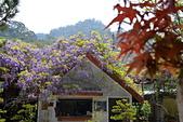 粗坑窯 紫藤:DSC_9503_調整大小.JPG