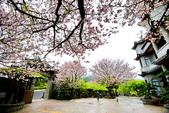 雨過東方寺2015:DSC_5684_調整大小.JPG