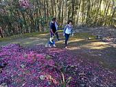 白毛台山  櫻花:IMG_20210213_093406_調整大小.jpg