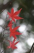 太平山11-5-98:IMG_0624.JPG