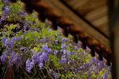 粗坑窯 紫藤:DSC_9723Z_調整大小.jpg