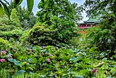 植物園賞荷:IMG_20190522_162141_調整大小.jpg