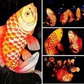 鯉魚燈:相簿封面