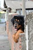 獒犬:image37_調整大小.JPG
