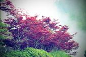 槭紅太平山:DSC_2351_調整大小.JPG