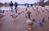 英國 白金漢宮 公園:DSC_0459_調整大小.JPG