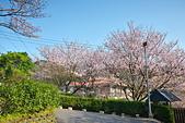 陽明山 橘餐廳 櫻花賞 4.10:DSC_0044_調整大小.JPG