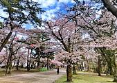 日本櫻花見:7FCD8C72-41E7-4C24-985E-E568C0C61CF3_調整大小.jpg
