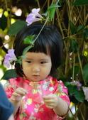 2020泰山 楓樹腳河濱公園 蒜香藤花:DSC_0161_調整大小.JPG