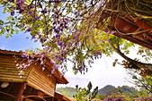 粗坑窯 紫藤:DSC_9881_調整大小.JPG