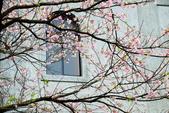 雨過東方寺2015:DSC_5672_調整大小.JPG