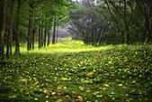 華梵大學的螢火蟲:S__547479558.jpg