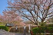 陽明山 橘餐廳 櫻花賞 4.10:DSC_0066_調整大小.JPG