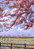 2020 與春天有約 三月 花旗木:IMG_20200327_093251_調整大小.jpg