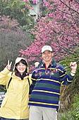 陽明山花季100:_DSC0233.JPG
