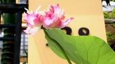 暑假遊越南-3:IMG_1846.JPG