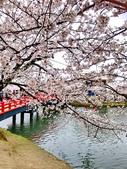 日本 平成時期的最後櫻花...2019:65FDF484-7EC2-43AB-836C-54641C5FB565_調整大小.jpg