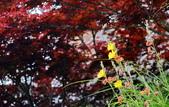 槭紅太平山:DSC_2734_調整大小.JPG
