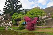 陽明山 櫻花+1:DSC_0059_調整大小.JPG
