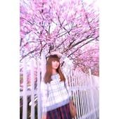 越來越愛你   2017平菁街賞櫻花:相簿封面