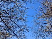 2021 至善公園 梅花林:IMG_20210115_093301_調整大小.jpg