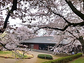 日本櫻花見:9FB72108-CB90-4A07-8A2F-47E0935027E5_調整大小.jpg