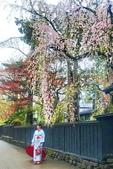 日本 平成時期的最後櫻花...2019:192E91DE-BCBE-4D48-8470-246796A959BD_調整大小.jpg