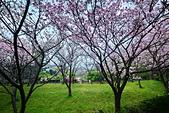 陽明山 櫻花+1:DSC_0264_調整大小.JPG
