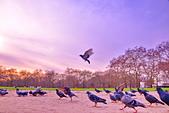 英國 白金漢宮 公園:DSC_0195_調整大小.JPG