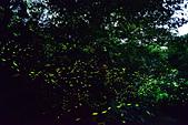 桂花吊橋 螢火蟲之夜:1D_調整大小.jpg