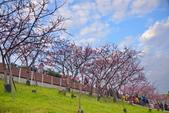 內湖 櫻花 2020:DSC_0810_調整大小.JPG