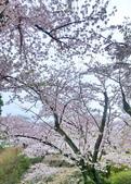 日本櫻花見:25BABD1A-0122-4F40-ABCC-C7F43AC414A9_調整大小.jpg