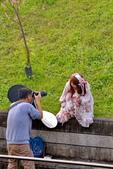 內湖 櫻花 2020:DSC_0828_調整大小.JPG