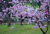 陽明山 櫻花+1:DSC_0290_調整大小.JPG