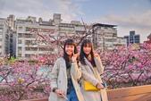 內湖 櫻花 2020:DSC_0714_調整大小.JPG