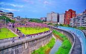 內湖 櫻花 2020:DSC_0919_調整大小.JPG
