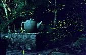 桂花吊橋 螢火蟲之夜:2AG_調整大小.jpg