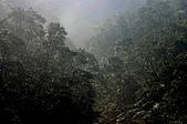 景觀-平湖露營埸98-12-13:IMG_0103.JPG