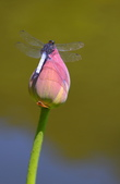 蜻蜓一夏:
